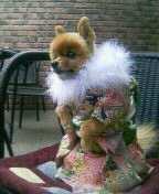 Kimonodog2