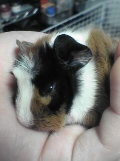 Piggie2_1