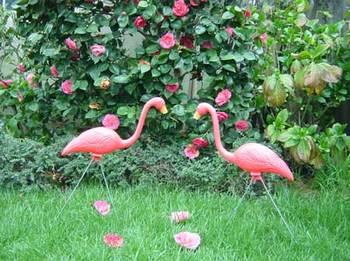 Flamingofleurs